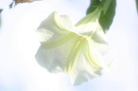 2007_11_17_075syuku