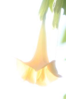 2007_11_17_089syuku