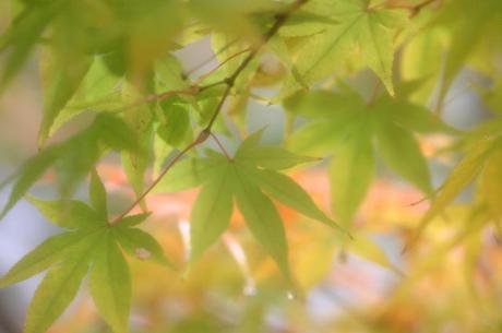 2007_12_03_024syuku