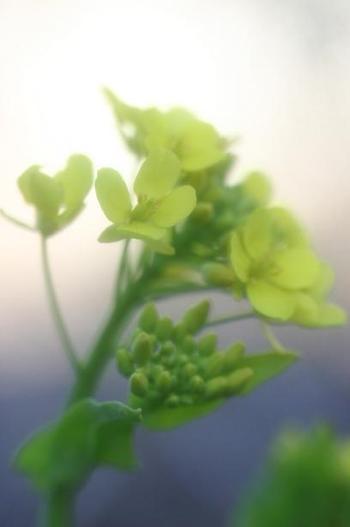 2008_02_29_054syuku