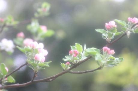 2008_04_18_017syuku