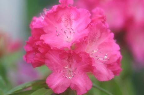 2008_04_28_017syuku
