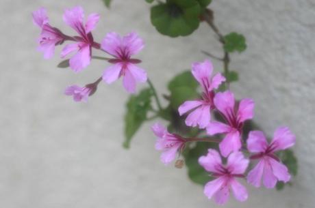 2008_05_16_044syuku