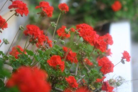 2008_05_16_068syuku
