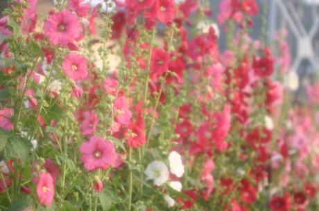 2008_6_10_090yuku