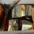 サゴシとシイラの切り身の醤油・味醂漬け