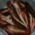 ホウボウと赤い雑魚