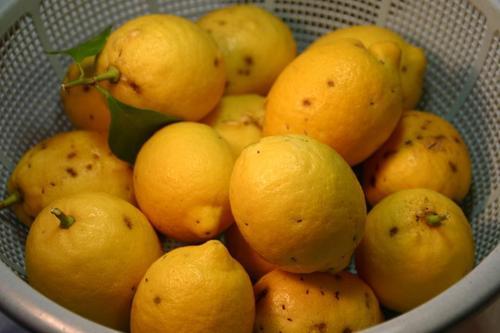 放棄された蜜柑山 レモン