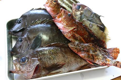 雑魚盛り合わせ