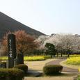 大室山 桜の里