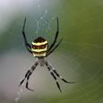 雨上がりの蜘蛛