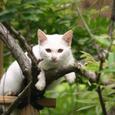 ノラの子猫