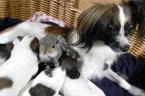 リスの赤ちゃんと子犬達