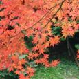 里山の紅葉