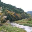 瀬戸川の紅葉