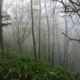 大谷嶺の尾根道