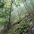 細島峠からの下山道