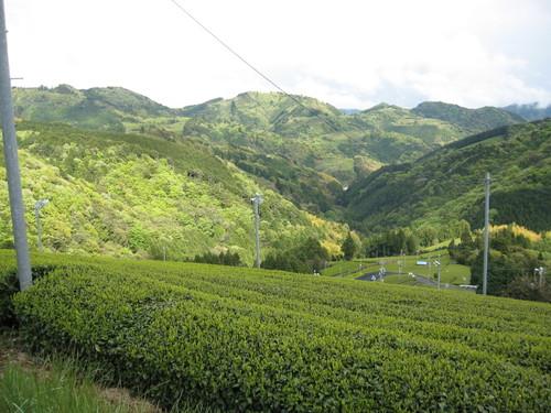 新緑の桧峠(藤枝市)