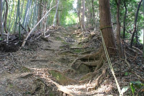 藤枝市ハイキングコース