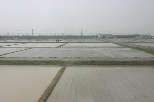 田植え直前の水田