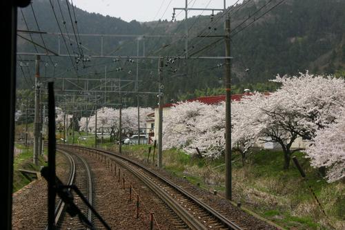 鉄道沿線の桜